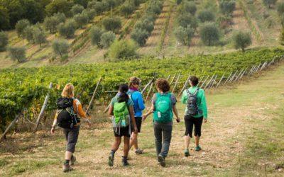 Sicani Wine Experience